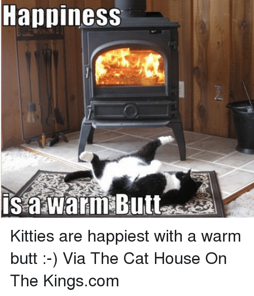Butt, Cats, and Kitties: Happiness  is a Warm Butt Kitties are happiest with a warm butt :-) Via The Cat House On The Kings.com