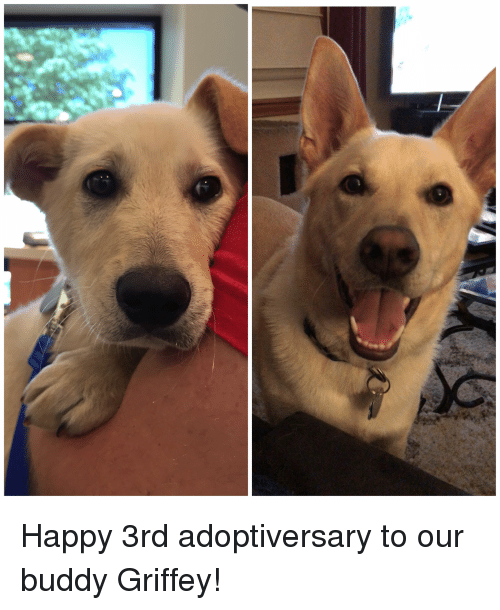 Happy, Buddy, and  Griffey: Happy 3rd adoptiversary to our buddy Griffey!