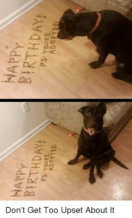 Birthday: HAPPY  BIRTHDAY  HAPPY  PS:YouE  BIRTHDAY!  PS:YouRE  3  ADO  ADOPTED <p>Don&rsquo;t Get Too Upset About It</p>