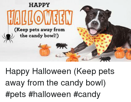 Candy, Halloween, and Memes: HAPPY  CALLOWEEW  (Keep pets away from  the candy bowl!) Happy Halloween (Keep pets away from the candy bowl) #pets #halloween #candy
