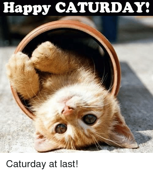 https://pics.onsizzle.com/happy-caturday-caturday-at-last-16186199.png