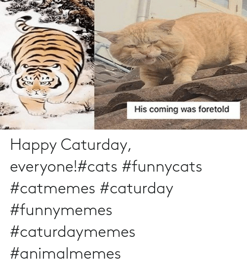 funnymemes: Happy Caturday, everyone!#cats #funnycats #catmemes #caturday #funnymemes #caturdaymemes #animalmemes