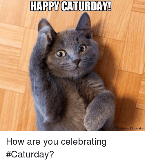 https://pics.onsizzle.com/happy-caturida-by-kitty-works-how-are-you-celebrating-caturday-5319735.png