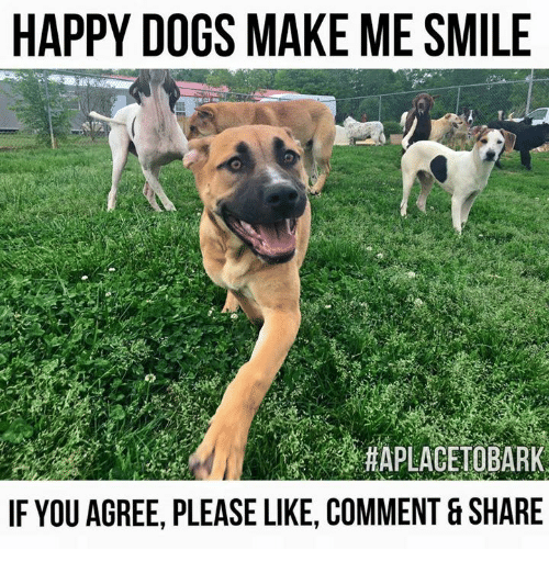 25 best memes about happy dog happy dog memes