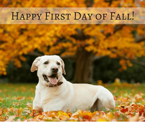 happy first day of fall 6318907 🔥 25 best memes about first day of fall first day of fall memes
