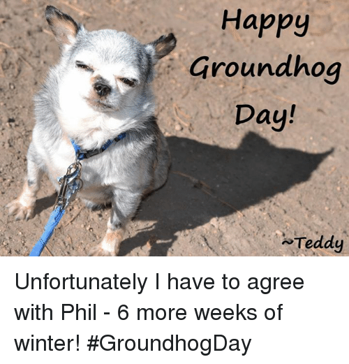 Memes, Groundhog Day, and 🤖: Happy  Groundhog  Day!  Teddy Unfortunately I have to agree with Phil - 6 more weeks of winter!    #GroundhogDay