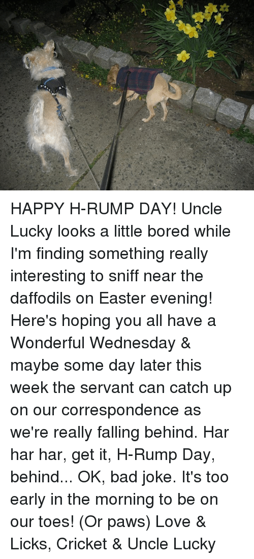 Have A Wonderful Wednesday: HAPPY H-RUMP DAY!  Uncle Lucky looks a little bored while I'm finding something really interesting to sniff near the daffodils on Easter evening!  Here's hoping you all have a Wonderful Wednesday & maybe some day later this week the servant can catch up on our correspondence as we're really falling behind.  Har har har, get it, H-Rump Day, behind... OK, bad joke.  It's too early in the morning to be on our toes!  (Or paws)  Love & Licks, Cricket & Uncle Lucky