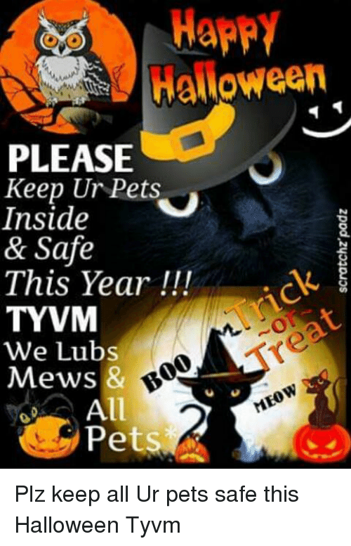 Halloween, Memes, and Pets: HappY  Halloween  PLEASE  Keep Ur Pets  Inside  & Safe  This Year  TYVM  We Lubs  00  Mews &  MEow  All  Pets Plz keep all Ur pets safe this Halloween Tyvm