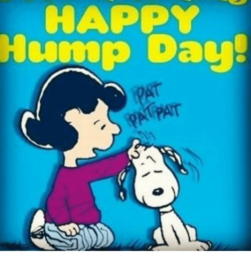Happy Hump Day Meme Funny : Funny hump day memes of on sizzle wednesday meme