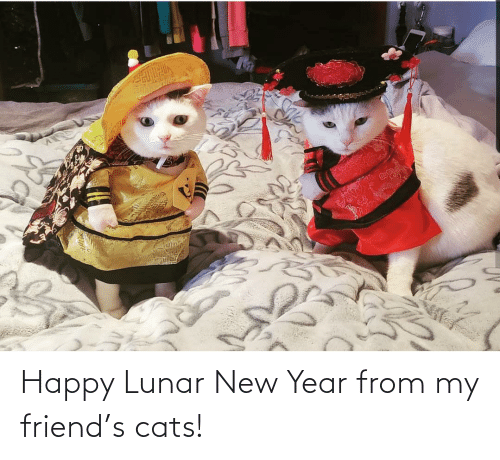 lunar new year: Happy Lunar New Year from my friend's cats!