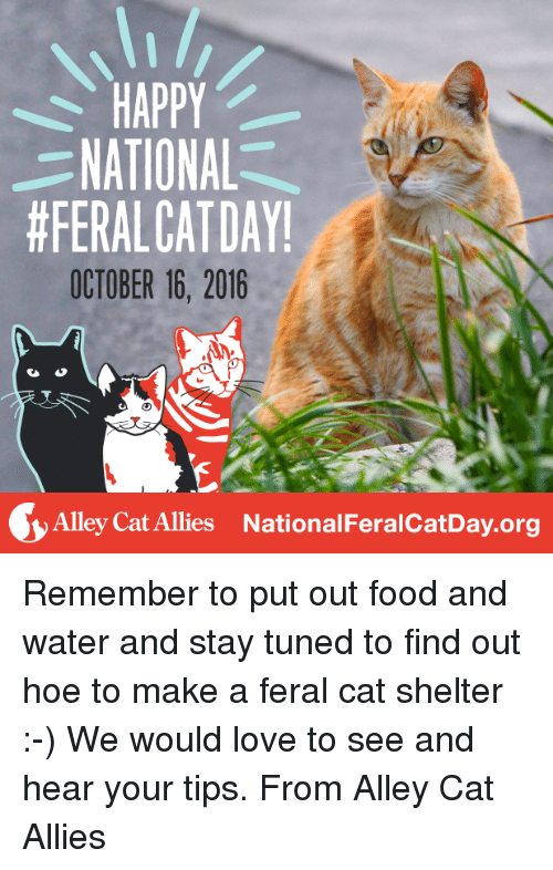 Cats, Food, and Hoe: HAPPY  NATIONAL  #FERALCAT DAY!  OCTOBER 16, 2016  Alley Cat Allies National FeralcatDay.org Remember to put out food and water and stay tuned to find out hoe to make a feral cat shelter :-) We would love to see and hear your tips. From Alley Cat Allies