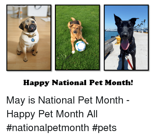 Memes, Pets, and Happy: Happy National Pet Month! May is National Pet Month - Happy Pet Month All  #nationalpetmonth #pets