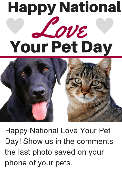 Love, Memes, and Phone: Happy National  VE  Your Pet Day Happy National Love Your Pet Day! Show us in the comments  the last photo saved on your phone of your pets.