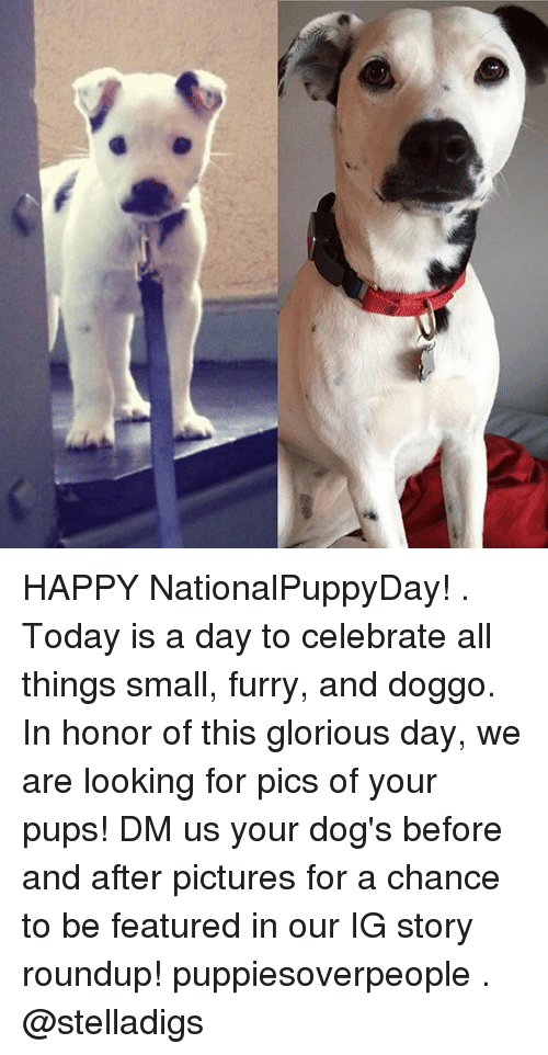 Memes, 🤖, and Doggo: HAPPY NationalPuppyDay! . Today is a day to celebrate all things small, furry, and doggo. In honor of this glorious day, we are looking for pics of your pups! DM us your dog's before and after pictures for a chance to be featured in our IG story roundup! puppiesoverpeople . @stelladigs