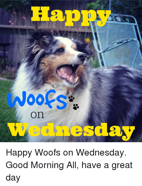Good Morning All Meme : Happy on wednesday woofs good morning