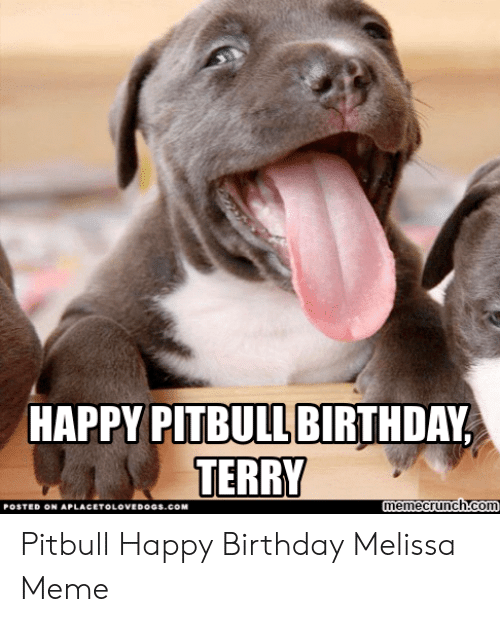 Happy Birthday Melissa: HAPPY PITBULL BIRTHDAY  TERRY  memecrunch.com  POSTED ON APLACETOLOVEDOGs.coM Pitbull Happy Birthday Melissa Meme