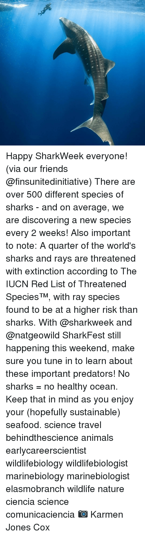 Animals, Friends, and Memes: Happy SharkWeek everyone! (via our friends @finsunitedinitiative) There are over 500 different species of sharks - and on average, we are discovering a new species every 2 weeks! Also important to note: A quarter of the world's sharks and rays are threatened with extinction according to The IUCN Red List of Threatened Species™, with ray species found to be at a higher risk than sharks. With @sharkweek and @natgeowild SharkFest still happening this weekend, make sure you tune in to learn about these important predators! No sharks = no healthy ocean. Keep that in mind as you enjoy your (hopefully sustainable) seafood. science travel behindthescience animals earlycareerscientist wildlifebiology wildlifebiologist marinebiology marinebiologist elasmobranch wildlife nature ciencia science comunicaciencia 📷 Karmen Jones Cox