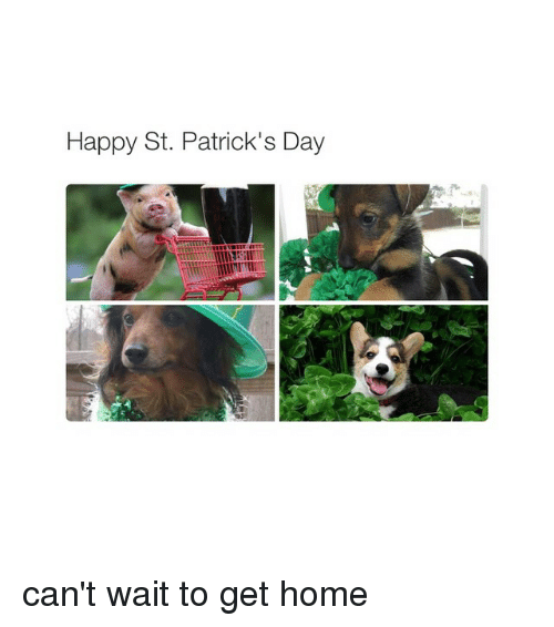 Girl Memes: Happy St. Patrick's Day can't wait to get home