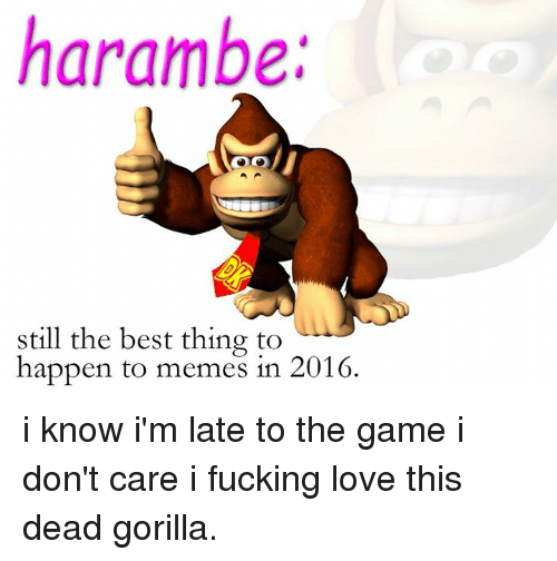 Fucking, Love, and Meme: harambe.  still the best thing to  happen to memes in 2016. i know i'm late to the game i don't care i fucking love this dead gorilla.