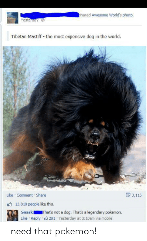 like comment share: hared Awesome World's photo,  Yesteruay  Tibetan Mastiff - the most expensive dog in the world.  D 3,115  Like Comment Share  6 13,810 people like this.  Snark  That's not a dog. That's a legendary pokemon.  Reply 3 281 Yesterday at 3:10am via mobile  Like I need that pokemon!
