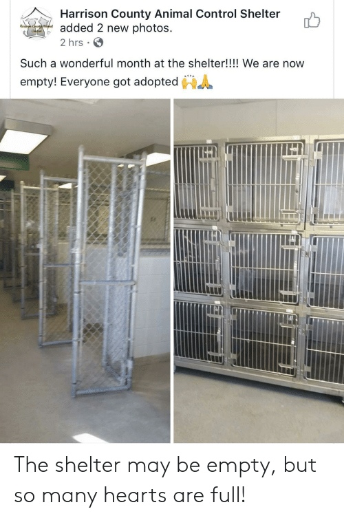 Harrison: Harrison County Animal Control Shelter  added 2 new photos  Haison Ceunttninal  Conthel  2 hrs  Such a wonderful month at the shelter!!!! We are now  empty! Everyone got adopted The shelter may be empty, but so many hearts are full!