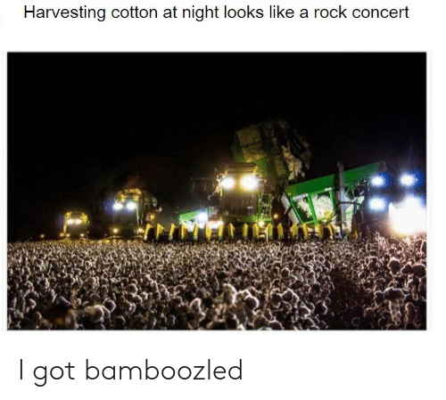 Harvesting: Harvesting cotton at night lookss like a rock concert I got bamboozled