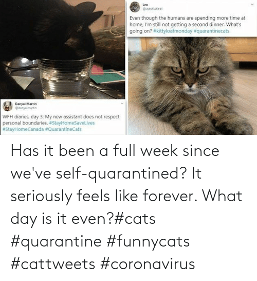 Feels Like: Has it been a full week since we've self-quarantined? It seriously feels like forever. What day is it even?#cats #quarantine #funnycats #cattweets #coronavirus