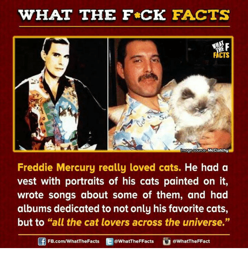 Dank, Paintings, and Mercury: HAT THE FCK FACTS  FACTS  mage source  McClatchy  Freddie Mercury really loved cats.  He had a  vest with portraits of his cats painted on it,  wrote songs about some of them, and had  albums dedicated to not only his favorite cats,  but to GG  the cat lovers across the universe.  all FB.com/WhatThe Facts  @WhatTheFFacts  @WhatTheFFact