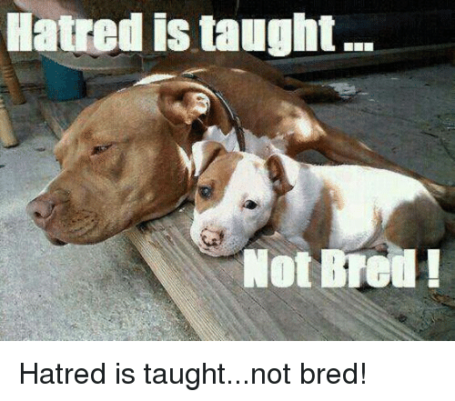 Hatre: Hatred istaught  Not Hatred is taught...not bred!