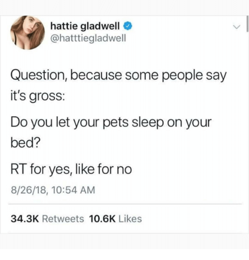 Its Gross: hattie gladwell  @hatttiegladwell  Question, because some people say  it's gross:  Do you let your pets sleep on your  bed?  RT for yes, like for no  8/26/18, 10:54 AM  34.3K Retweets 10.6K Likes