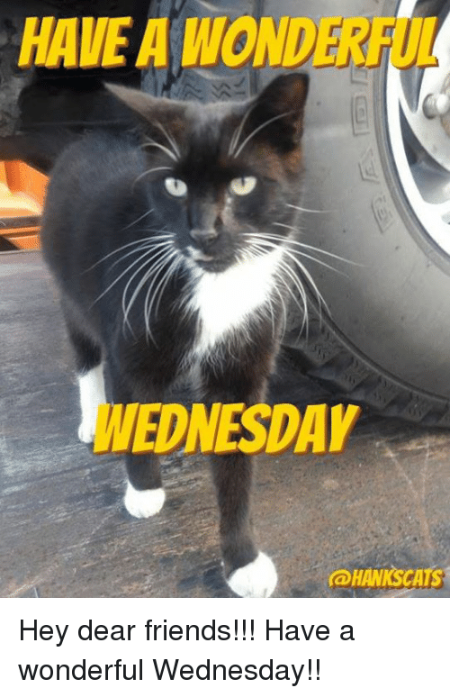Have A Wonderful Wednesday: HAVE A WOND  WEDNESDAY  HAWNSCATS Hey dear friends!!!  Have a wonderful Wednesday!!