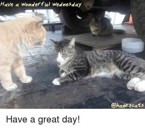 Have A Wonderful Wednesday: Have a wonderful Wednesday  @hankscats Have a great day!