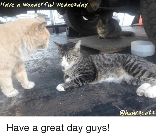 Have A Wonderful Wednesday: Have a wonderful Wednesday  @hankscats Have a great day guys!