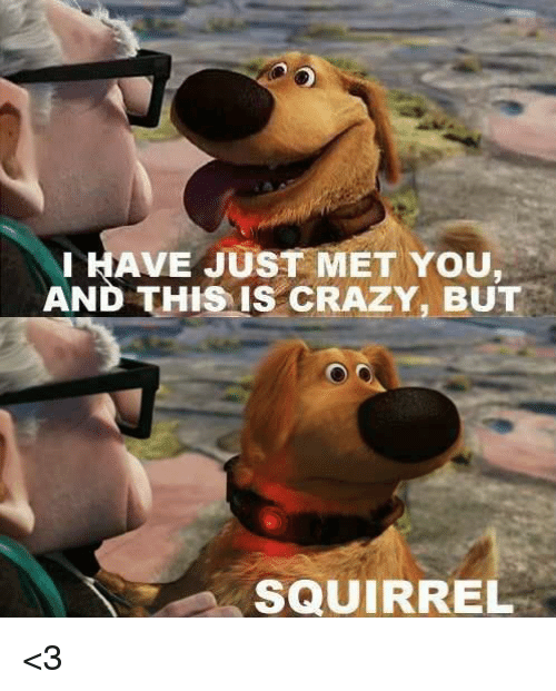 Memes, Mets, and Squirrel: HAVE JUST MET YOU  AND THIS IS CRAZY, BUT  SQUIRREL <3
