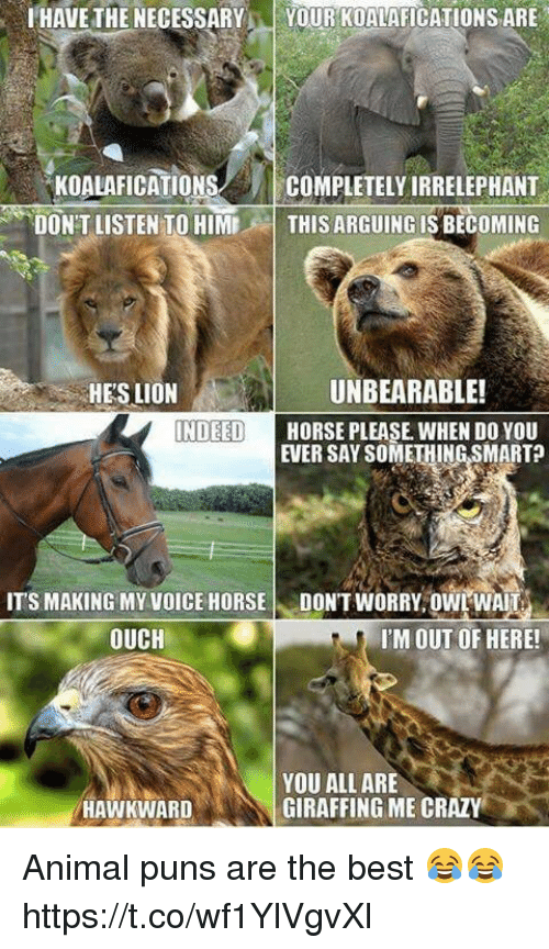 animal puns: HAVE THE NECESSARYYOUR KOALAFICATIONS ARE  KOALAFICATIONSCOMPLETELY IRRELEPHANT  DON'T LISTEN TO HIMTHIS ARGUING IS BECOMING  HES LION  UNBEARABLE!  NDEED  HORSE PLEASE WHEN DO YOU  EVER SAY SOMETHING SMART?  ITS MAKING MYVOICE HORSE DONT WORRY OWT WAIT  OUCH  I'M OUT OF HERE!  YOU ALL ARE  GIRAFFING ME CRAZY  HAWKWARD Animal puns are the best 😂😂 https://t.co/wf1YlVgvXl