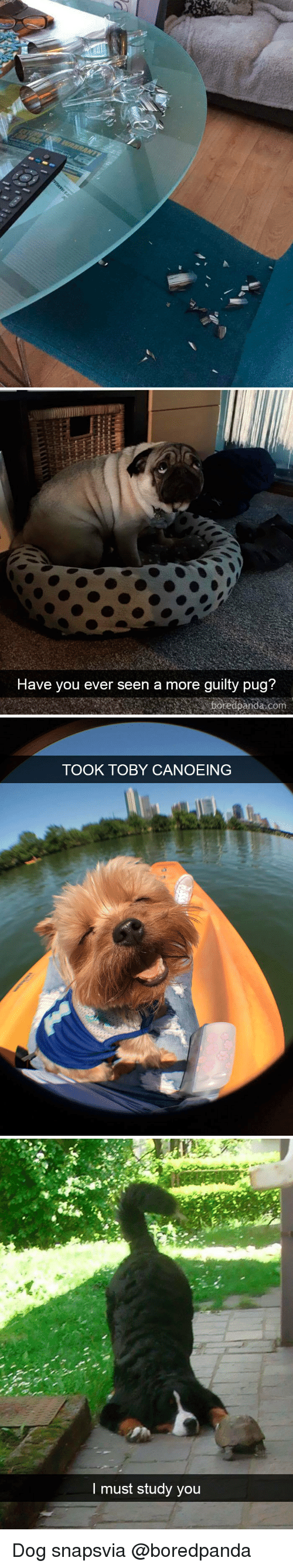 Canoeing: Have vou ever seen a more quilty pua?  boredpanda com   TOOK TOBY CANOEING   I must study you Dog snapsvia @boredpanda