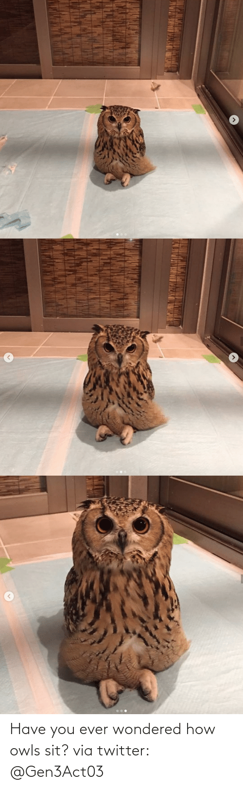 Sit: Have you ever wondered how owls sit? via twitter: @Gen3Act03