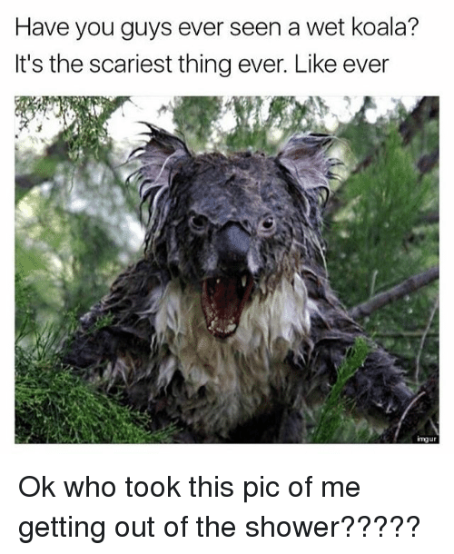 Koalaing: Have you guys ever seen a wet koala?  It's the scariest thing ever. Like ever  imgu Ok who took this pic of me getting out of the shower?????