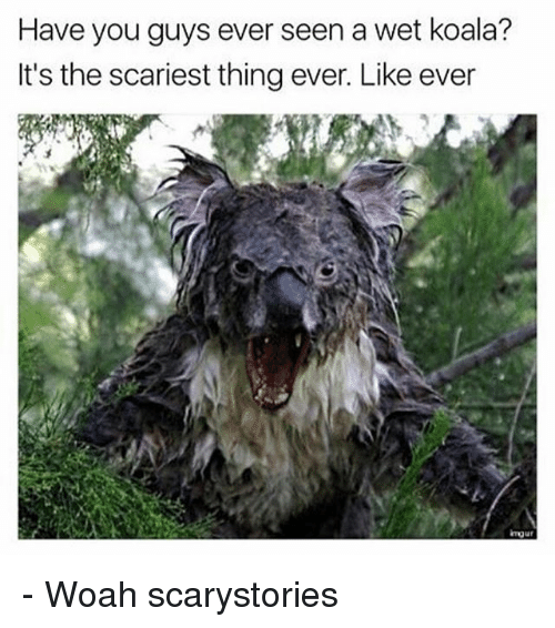 Koalaing: Have you guys ever seen a wet koala?  It's the scariest thing ever. Like ever - Woah scarystories