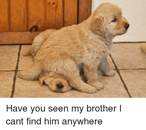 Funniest Meme You Have Seen : Have you seen my brother i cant find him anywhere funny