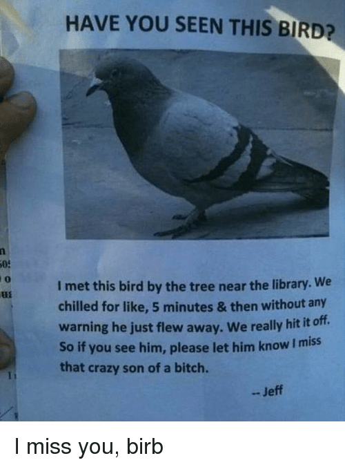 Bitch, Crazy, and Memes: HAVE YOU SEEN THIS BIRD?  05  0  I met this bird by the tree near the library. We  chilled for like, 5 minutes & then without any  warning he just flew away. We really hit it off.  So if you see him, please let him know I miss  that crazy son of a bitch.  - Jeff I miss you, birb
