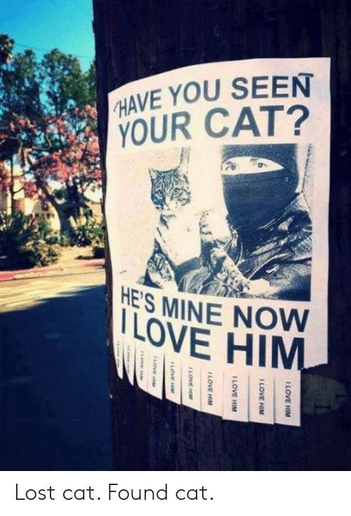 Mine Now: HAVE YOU SEEN  YOUR CAT?  ES MINE NOW  LOVE HIM Lost cat. Found cat.