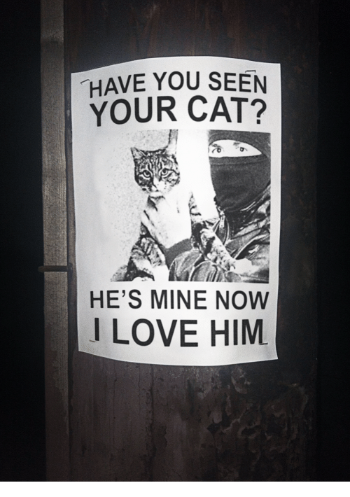 Mine Now: HAVE YOU SEEN  YOUR CAT?  HE'S MINE NOW  I LOVE HIM