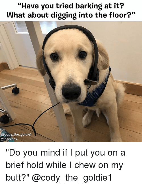 """Butt, Memes, and Mind: """"Have you tried barking at it?  What about digging into the floor?""""  9)  @cody the goldiet  @barkbox """"Do you mind if I put you on a brief hold while I chew on my butt?"""" @cody_the_goldie1"""