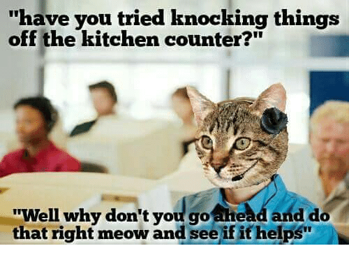 25 best memes about right meow right meow memes. Black Bedroom Furniture Sets. Home Design Ideas