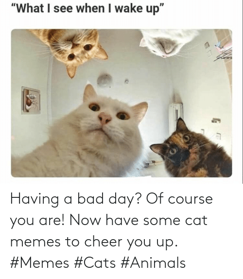 Bad day: Having a bad day? Of course you are! Now have some cat memes to cheer you up. #Memes #Cats #Animals