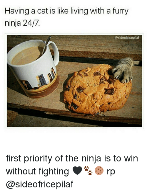 the ninja: Having a cat is like living with a furry  ninja 24/7.  @sideofricepilaf first priority of the ninja is to win without fighting 🖤🐾🍪 rp @sideofricepilaf