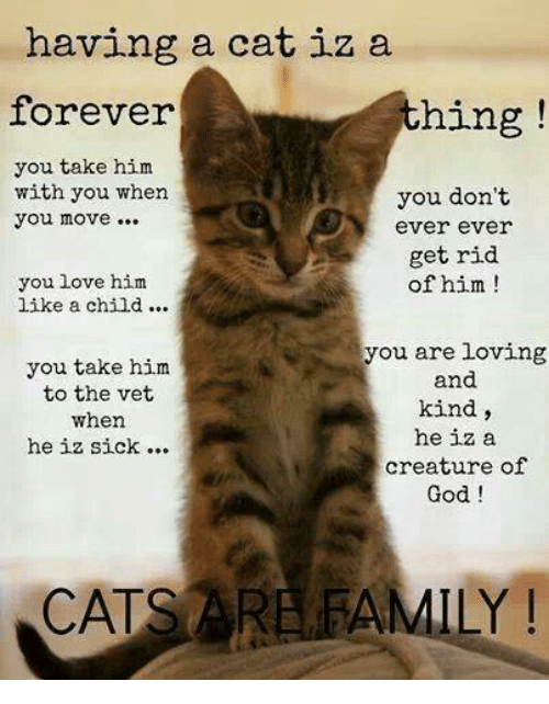 Things cats dont like