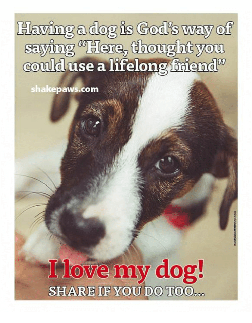 love my dogs: Having a dog is God's way of  saying Here, thought you  could use a lifelong friend'  shake paws.com  love my dog!  SHARE IF YOU DO TOO