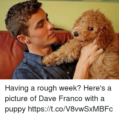 Rough Week: Having a rough week? Here's a picture of Dave Franco with a puppy https://t.co/V8vwSxMBFc